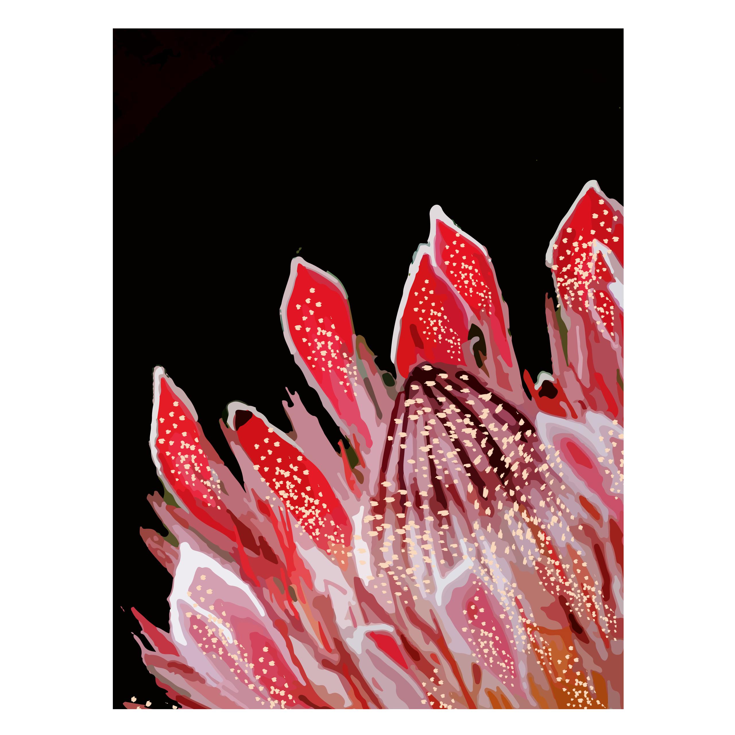 Vibrant Protea_fullsize